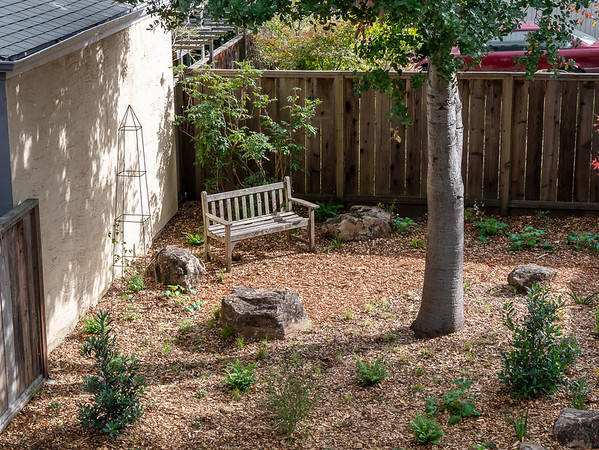 "We're heading for the back opening with it's bench, widened path, and ""meadow"" at the foot of the oak.   That Oregon grape behind the bench is a carryover from the old garden.  The original plan didn't have the old bench, but this siting -- my general idea, sharp placement by the workmen -- worked well."
