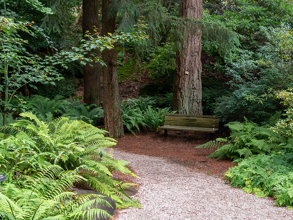 The fern garden.  There were lots of exotic, mostly Asian, ferns here, but I was most attracted to the natives: sword ferns under Douglas firs.  Just like Powell River.