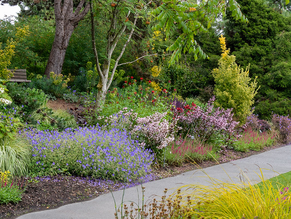 "Tuesday, June 21.  We began our first day in Vancouver at the Van Dusen Garden.  This is a very ""English"" garden with its drifts of perennials on banks."