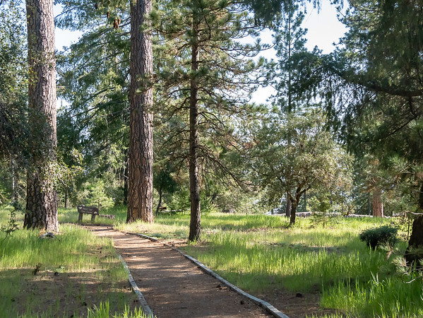 It's a nice picnic area with a nice nature trail.  The trees of interest here, however, are not pines, although there are some Coulter pines.  Of more interest are the bigger ones in this picture, bigcone Douglas firs.  I'd never seen these before.