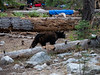 We had a bear wander though camp about an hour before sunset.  He didn't even try to go after camp food.
