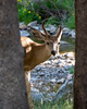 The camp featured fearless deer.