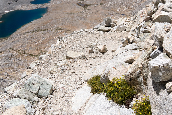 Time to head down those switchbacks on the south side of Forester Pass.   While wide and solid, they sure feel exposed.  Ivesia on the rocks.