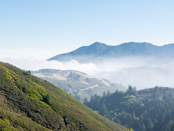 I started to see blue sky before I got to the top of Azalea Hill.  Here, later, as I make the turn down to Carson Falls, the heavy fog is well below but there is still haze above.  This is the view southeast to the Middle and East Peaks of Mt. Tam in the distance.