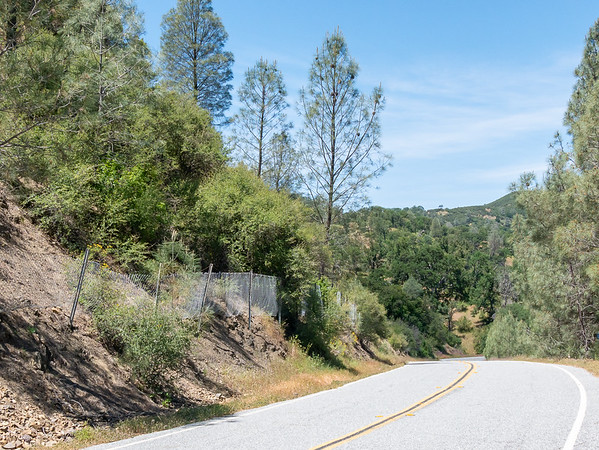 A couple of stops on the road heading west from the Upper San Antonio Valley toward Mt. Hamilton.  Here's one stop in the pine and oak woodland, with ...