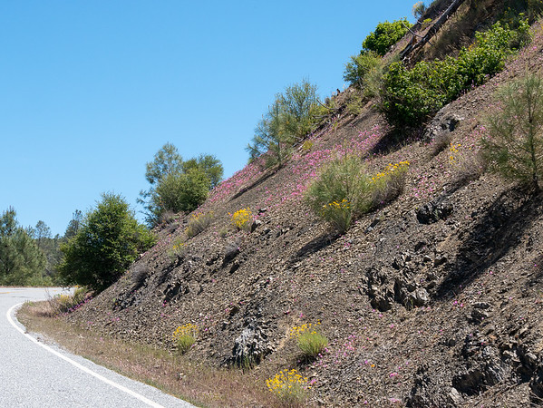 "Clarkia breweri (fairy fans).  This pink hillside, also on the road between the Upper San Antonio Valley and Mt. Hamilton, said, ""Stop!""."