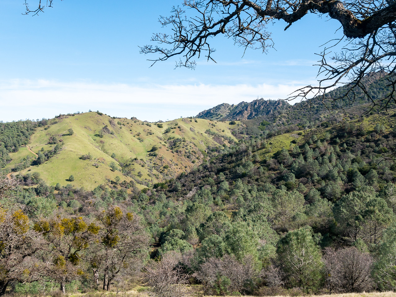 A view across the Deer Creek valley.  The road up to Merchio Gap is a the left.  North peak at the right center.  The main peak is tucked under the tree branches at the far right.  (And an oak nicely adorned with American mistletoe at the lower left.)