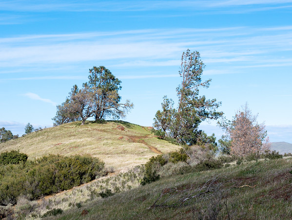 Just beyond Mitchell Rock, there are a variety of little meadowed areas with scatter pines and  oaks.