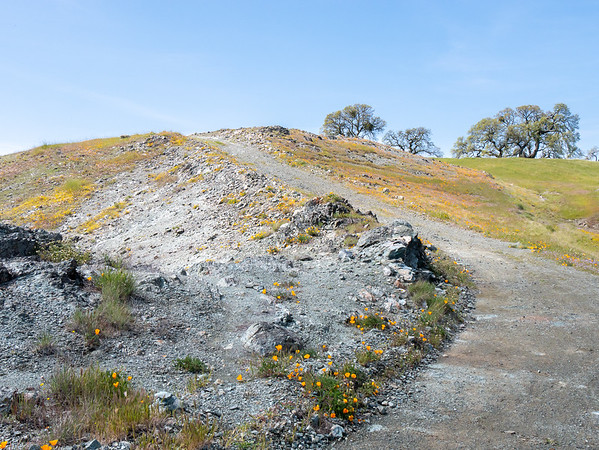 """The top.  The Willson Peak serpentine """"outcrop"""" is really the tailings of a not-very-successful Civil War era copper mine.  It's still something of a mess.  But this odd rock can grow flowers, especially at the margins or away from the worst of the gravel."""