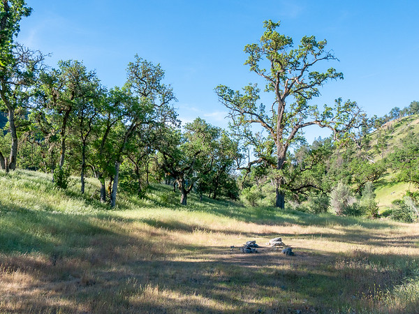 A larger view of the camp area as I depart.  That big valley oak at the back right shows the recovery from the Lick Fire.  The smaller branches burned but it has resprouted from the larger branches.  But it's still far from full.