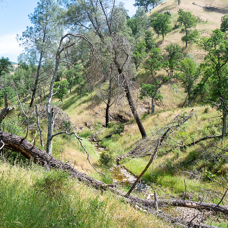 For the most part, the walk along Robinson Creek was through open grassland with scattered pines and oaks, a few deadfalls, and not always much tread.  Robinson Creek had water, but it's not a large stream.  It may be dry soon.