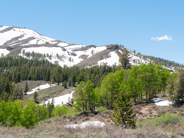 Here, on the east side at 9,000', most of the ground is open and the aspens have leaves.  Still, all seems very recently thawed.  (On the west side, the snow extended 500 to 1,000 feet lower.)