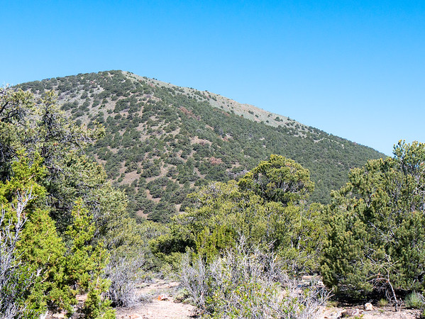 The gentle cone of Wildrose Peak comes into view.  From here I drop less than 100' to the second saddle and begin the final 800' of switchacks to the top.  The foreground is representative of the open pinyon woodland once got beyond the first saddle.