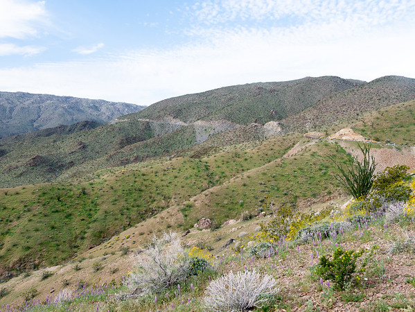 I headed out on the Montezuma Grade (Country Road S-22).  The first turnout was only at 1,200' (about 500 feet above the valley floor) and the vegetation was familiar.