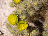 Cylindropuntia sp.  (cholla).  C. echinocarpa (sliver cholla) is my first guess but C. ganderii (Gander's cholla) or an intergrade is quite possible.  A side-on view would have helped the identification.