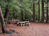 Near the entrance there are several picnic areas, mostly tucked under redwoods.  While it was a bit chilly, I had my lunch here.