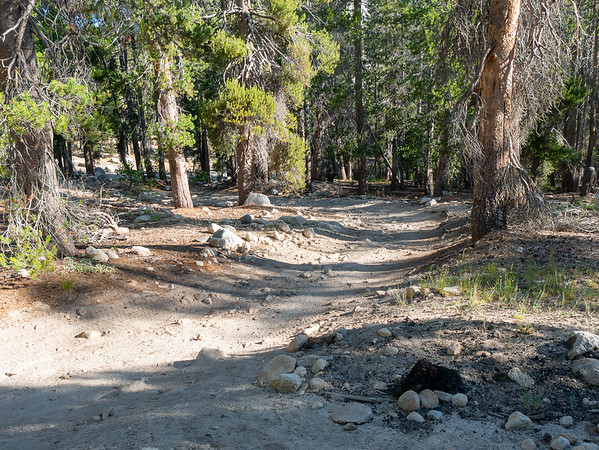 Tuesday, July 24.  On the trail.  After a short connector from the parking lot, the route joins the Dusy-Ershim OHV Route for a mile or so.  It looks like a back road here but I gather farther on it's one of more gnarly OHV routes out there. I saw no vehicles.