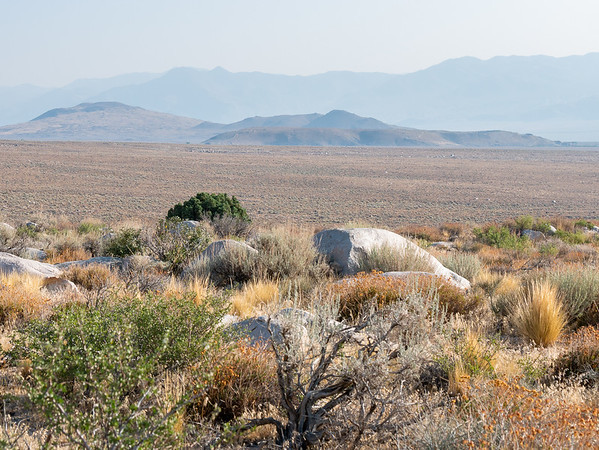 """A view across the Owens Valley and the high desert I'm walking through ... and the first """"tree"""", although Utah junipers straddle the line between tree and shrub."""