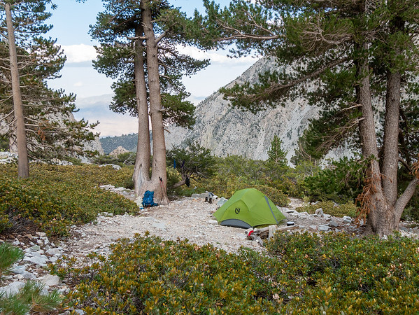 My camp at 9600'.  Western white pine at right; lodgepoles at left.  Chinquapin and mountain mahogany in the under story.  There were some whitebark pines and one Jeffery pine in the area too.