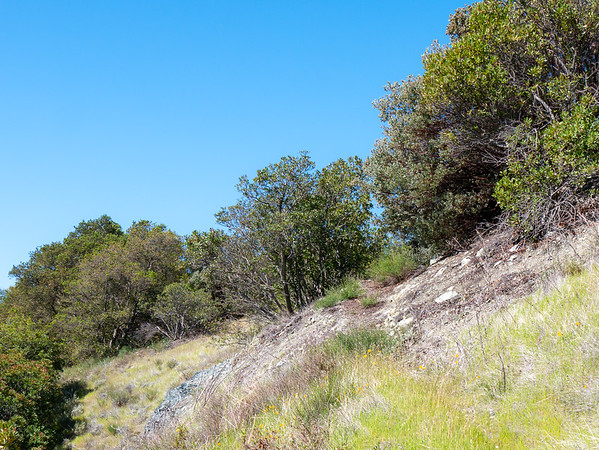 Another sense of what these high meadows could look like, this one near the divide where upland walk gives way to the steep descent toward Villa Creek.