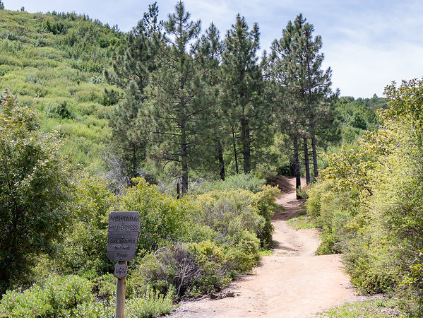 The first part of the trail didn't burn.  This looks much like it did in 2012, save six more years of growth on the trees and shrubs. _