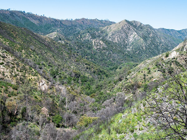 Beyond the saddle: the view down the South Fork of the Big Sur.  It's clearly a landscape that burned recently, but a close look shows a mostly intact forest at the bottom.