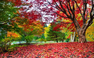 Chauncey Beadle Memorial Biltmore Estate Fall