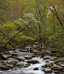 Spring Little River