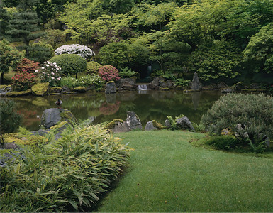 Duck at Japanese Garden Portland