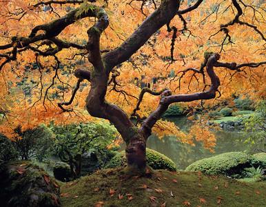 Japanese Garden Portland.  Schneider 72mm XL Center Filter, Fuji Velvia 100