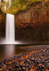 Abiqua Falls Leaf Trail