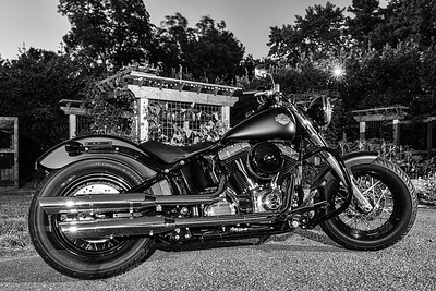 Harley in Black!