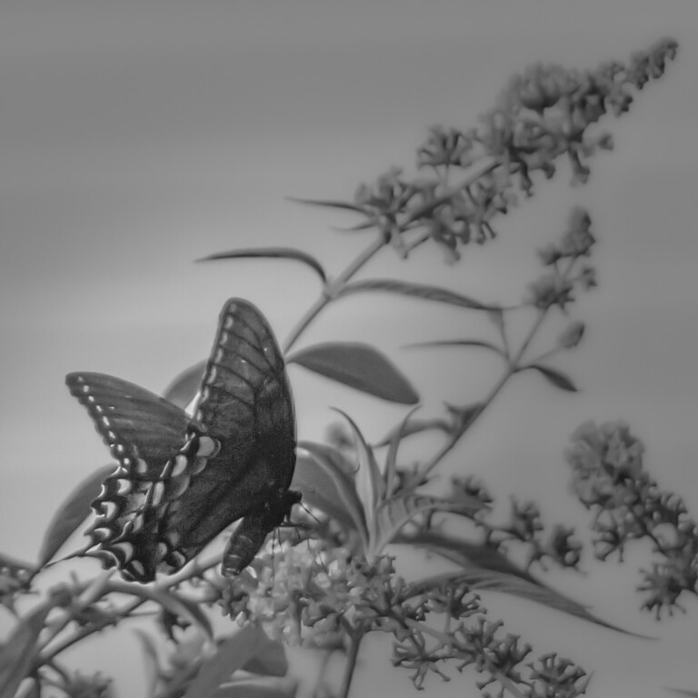 Butterfly at Dusk