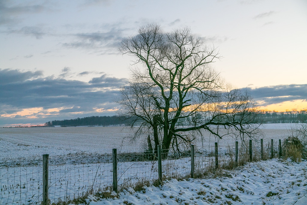 Late Winter Morning
