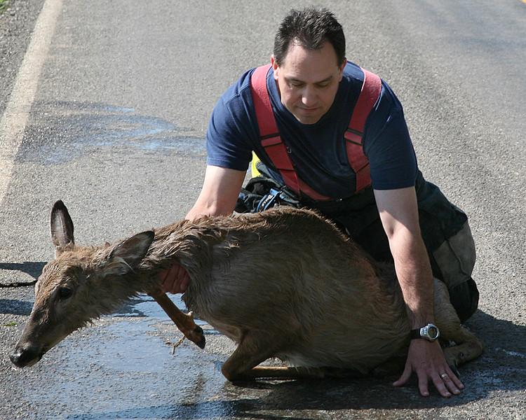 deer rescue.jpg