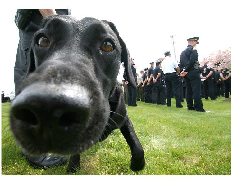 memorial police dog.jpg