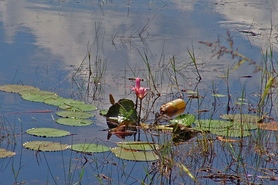 Nice flower. Unfortunately there was a plastic bottle in the water and spoiled the picture (and the nature as well).