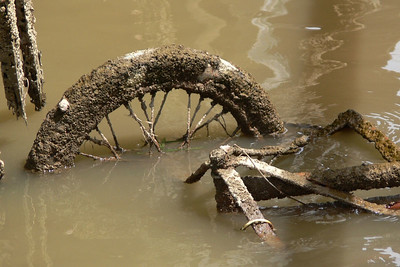 Im Wasser im Kampong Ayer findet man so allerhand.