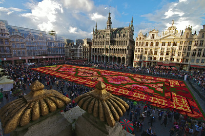 Brussels Carpet of Flowers 2014