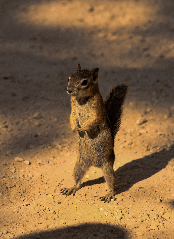 I'M YOUR GUIDE.  I DO ALL THE TALKING. WELCOME TO BRYCE  CANYON NATIONAL PARK