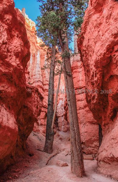 2013 Bryce Canyon National Park, Utah - Spring