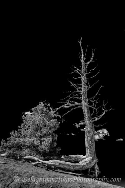 20170420_Bryce Canyon_1407_BW