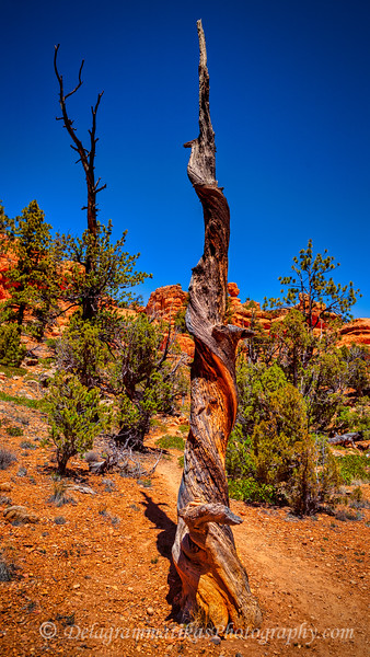 20170422_Bryce Canyon_1302