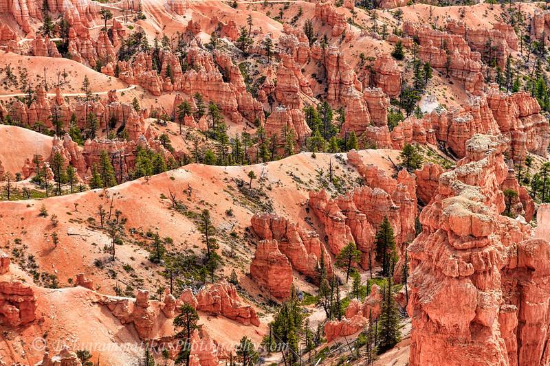 20170416_Bryce Canyon_1067