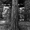 20170418_Bryce Canyon_1574_BW