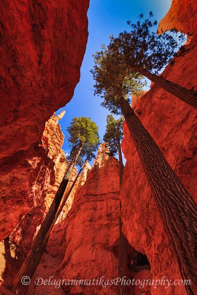 20170418_Bryce Canyon_1727