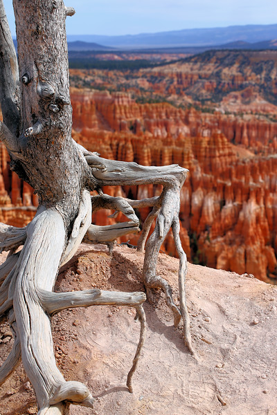 Bryce Canyon Tree Roots 4.2017.jpg