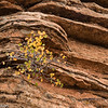 Leaves and sandstone, Zion.