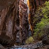A glow of sunlight in the Zion Narrows.