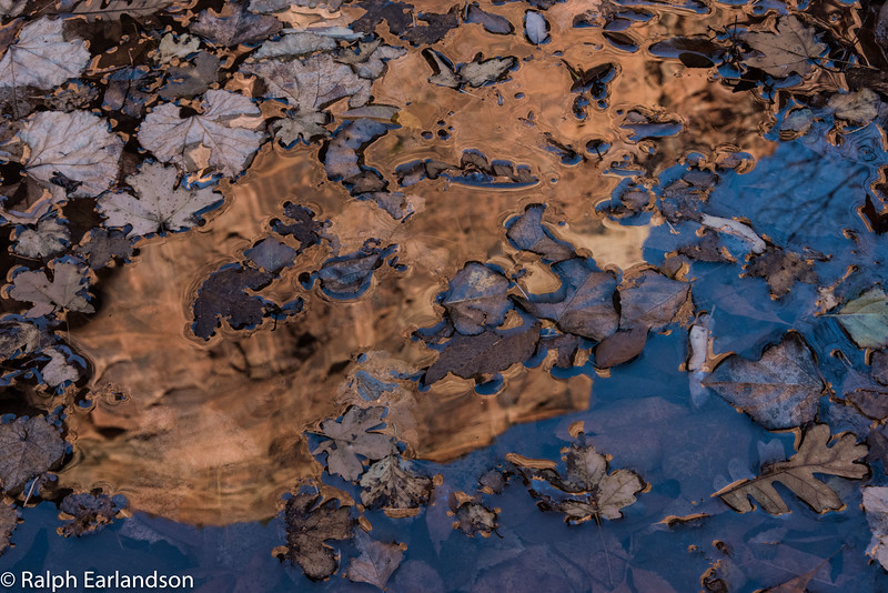 Leaves and reflection in the Emerald Pools in Zion.